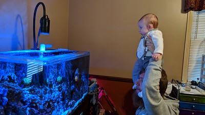 2019-03-27 - Bennet and Brian looking at Reef Tank