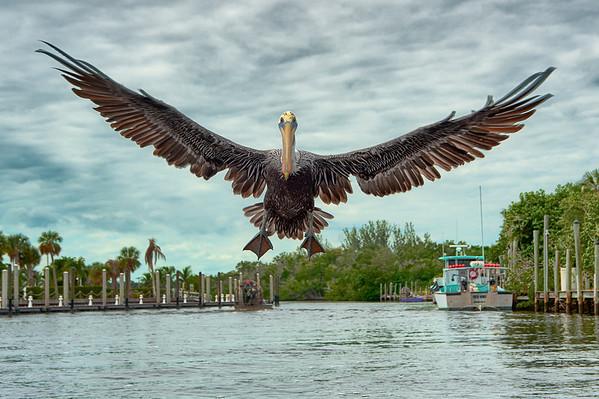 2011 Bonita Springs Florida!