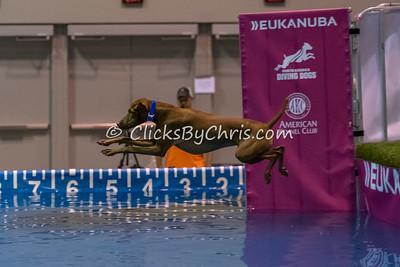 AM Splash