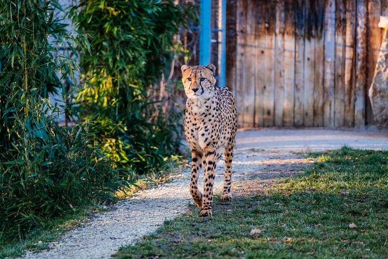 Tonis Zoo-0254.jpg