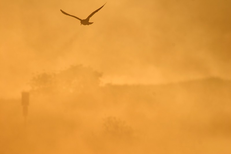 Gull at dawn [September; Park Point, Duluth, Minnesota]