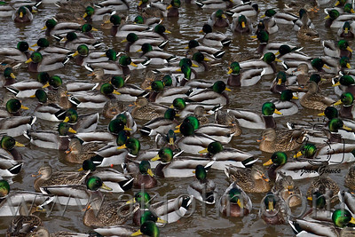 2012 MISC. BIRDS