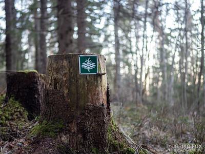 Mikonsaari Trail 2020