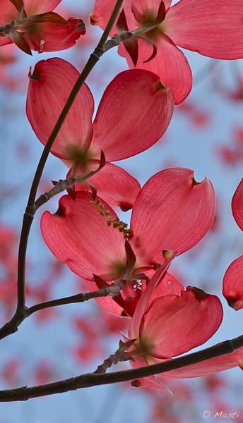 Pink-horz-1.jpg