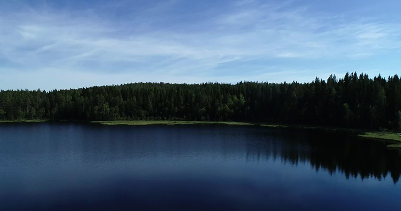 Aerial: pan over a forest lake with a wooden footbridge