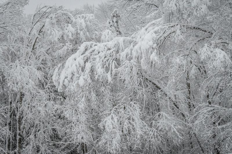 November 2018 Snowfall-_5009226.jpg