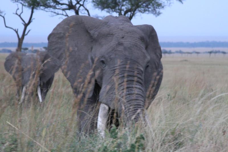 Kenya Part2 '15 265.JPG