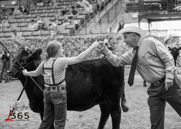 National Junior Limousin Show and Congress