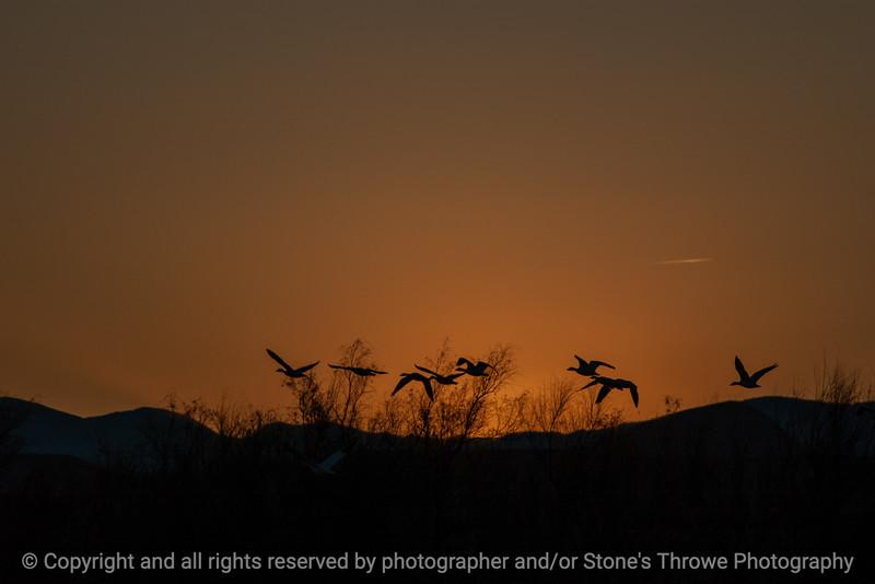 015-sunset-bosque_del_apache_nm-01dec06-12x08-008-350-9872