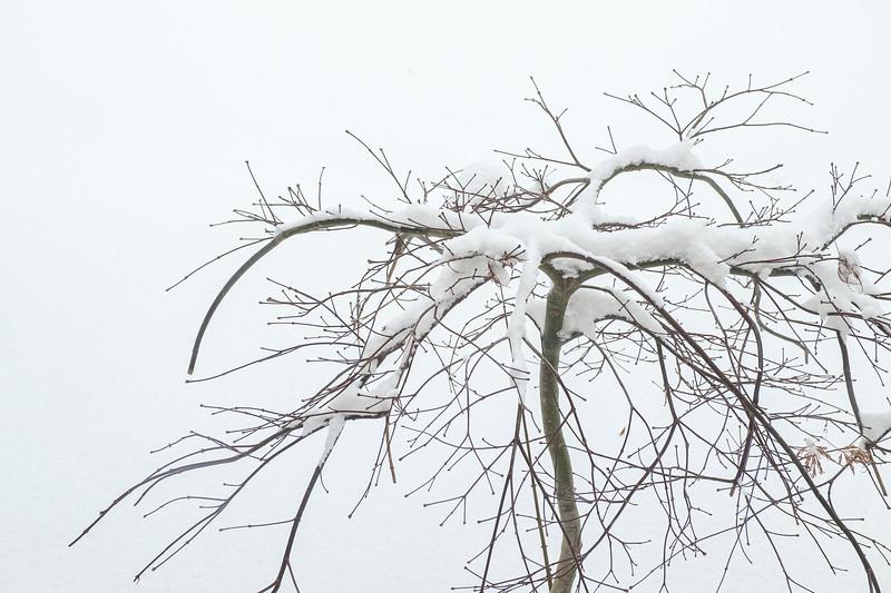 Small Bare Tree in Snow