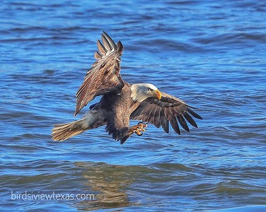 Conowingo Eagles