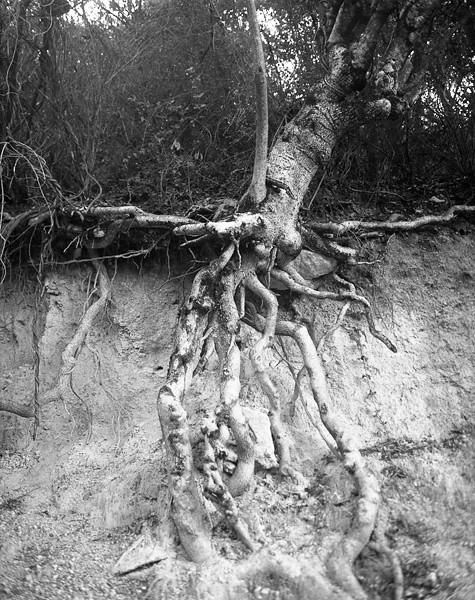 06_serralles_tree_roots.jpg