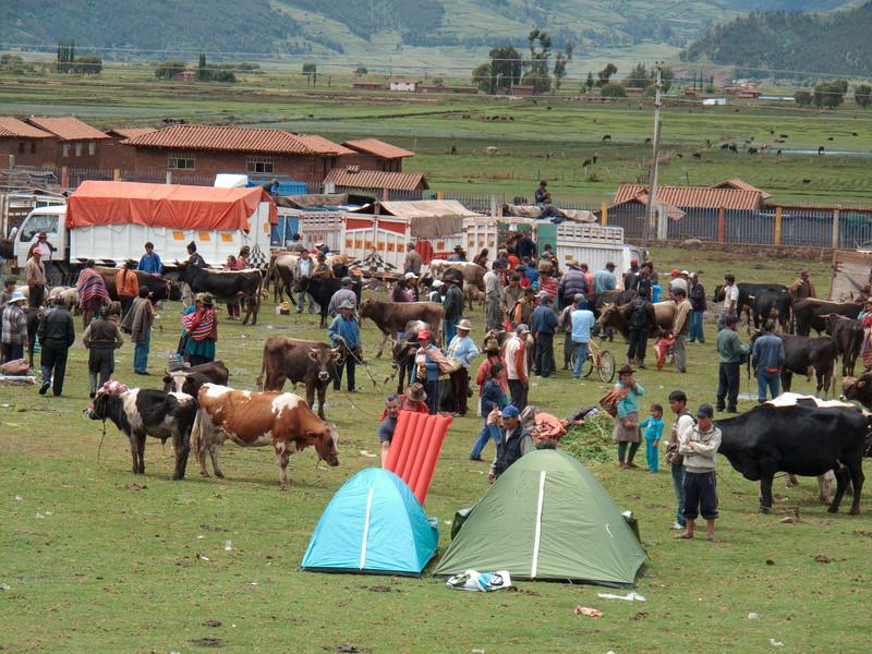 Peruvian Livestock Market