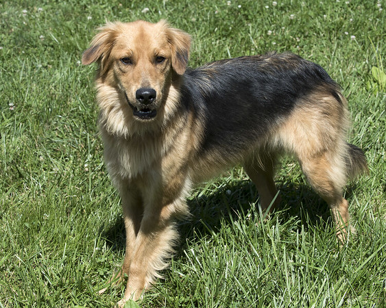 PetConnect dogs available 7-17-19