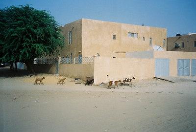 Mauritania 7: Château Jay (2003-2005)