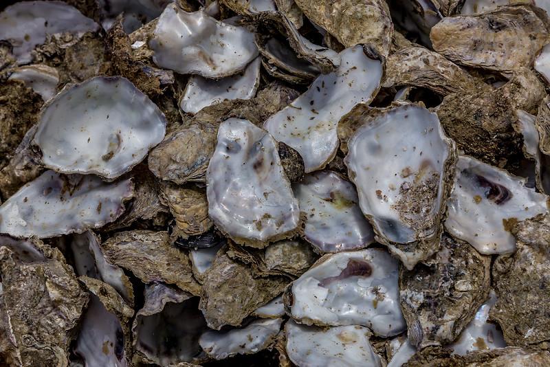 Austern - bereits verzehrt