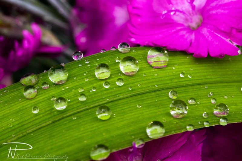 Water Drops in Garden-5.jpg