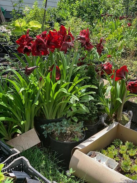 Mike's Greenhouse Nursery