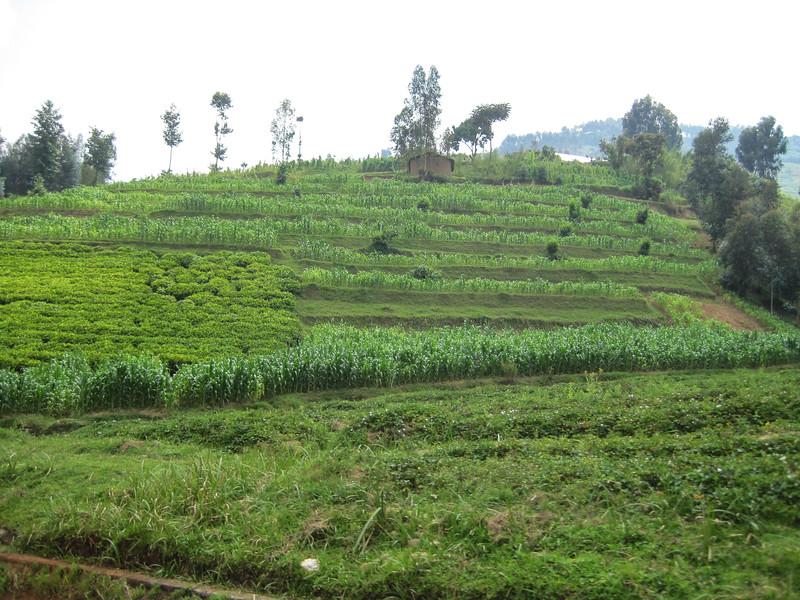 Rwanda_17_ixus-9142.jpg