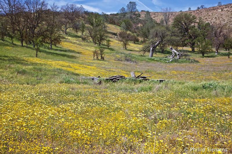 Hillside of flowers on Shell Creek Road