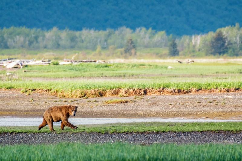 Bear 2, Katmai National Park