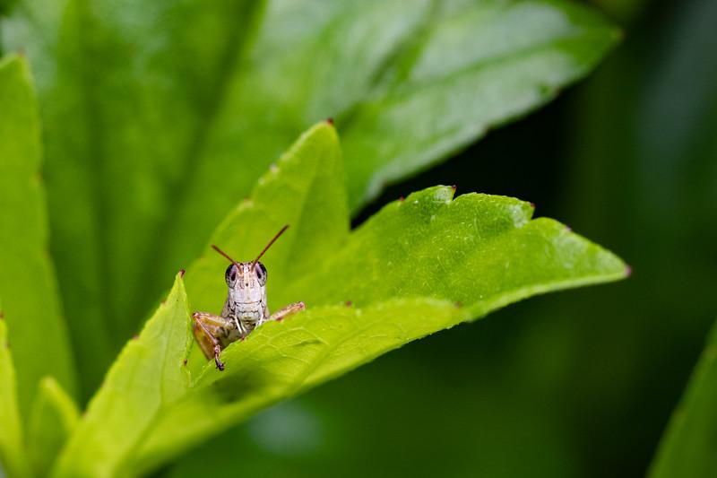 Grasshopper smile