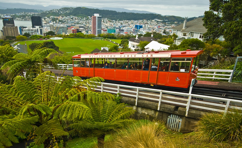 View from the hill, native ferns, cable car and Wellington City the capital of New Zealand.