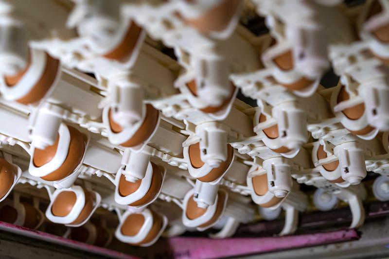 Eggs 55.jpg