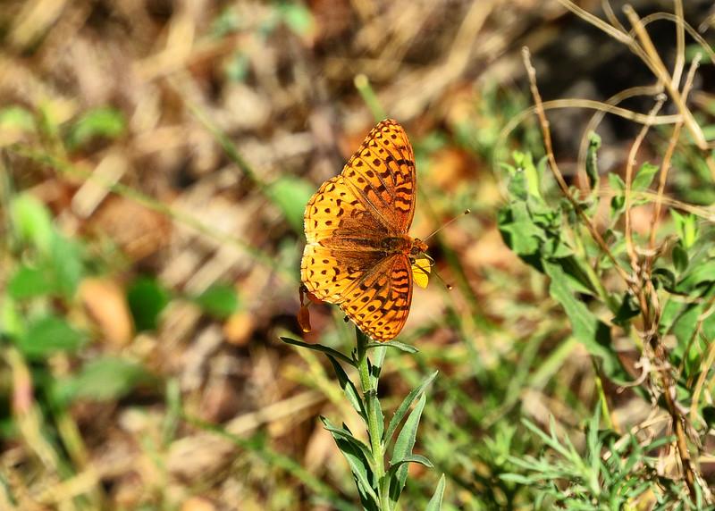 NEA_0284-7x5-Butterfly.jpg