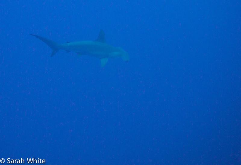 Project Shark 2013-138.jpg