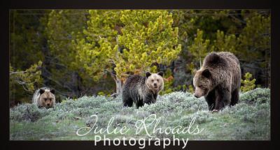 Wildlife - Yellowstone National Park