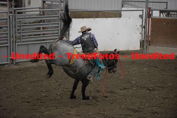 Finals - Exhibition Horse day 3