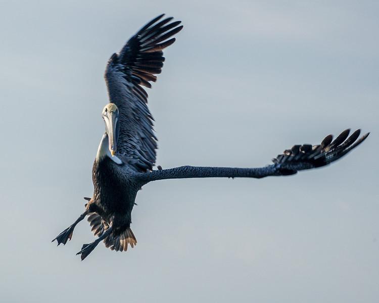 02-Wildlife birds.jpg
