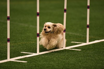 Delaware Valley GSDTC AKC Agility Trial September 22-23