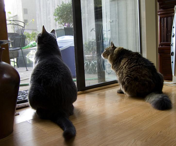 birdwatching-CRW_4238.jpg