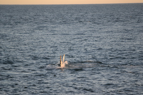 2011 Whale Watching Tour