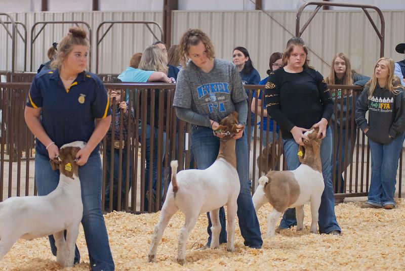 kay_county_showdown_goats_20191207-31.jpg