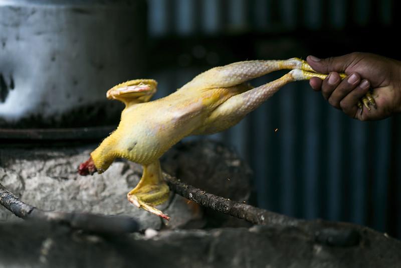 Pratt_Belize Farm_06.jpg