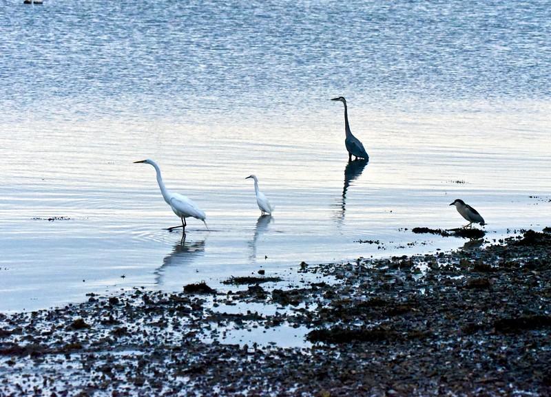 Heron's egrets.jpg