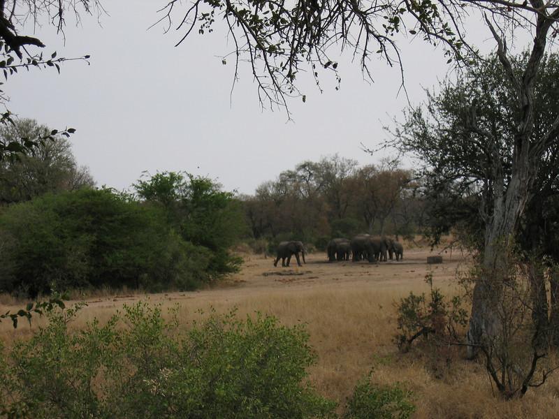 On safari Kruger 7.JPG