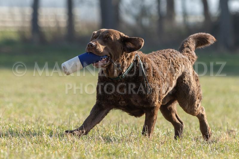 Dog Training Novice GD Feb2019-5922.jpg