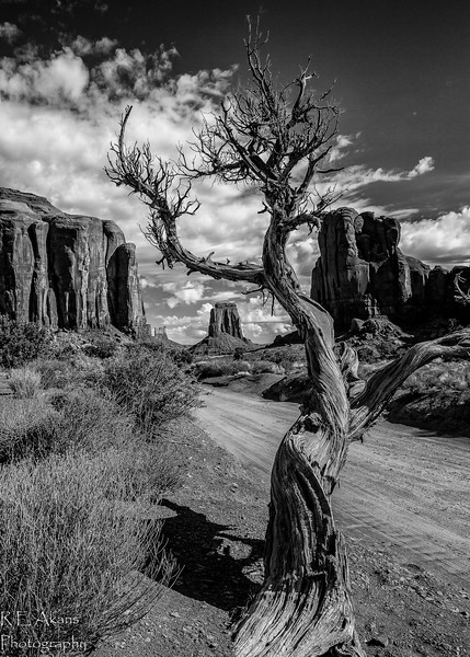 Monument Valley Twisted Juniper 2492 BW.jpg