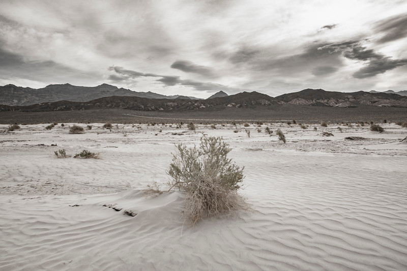 Death-Valley-Sand-dunes-morningBW.jpg