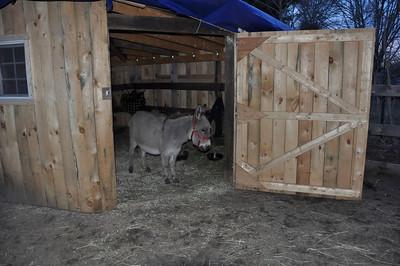 The Goats meet their brother Koda