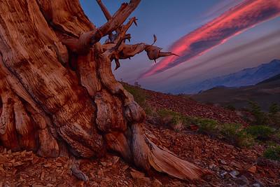 2015 Bristlecone Pines