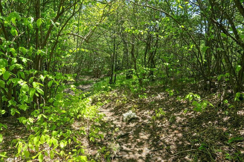 Mountains-to-Sea Trail -- 5,170'
