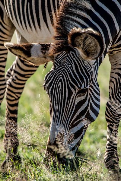 Samburu (8 of 70).jpg