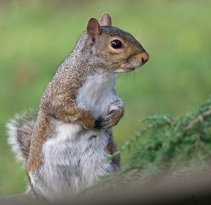Squirrels 2010