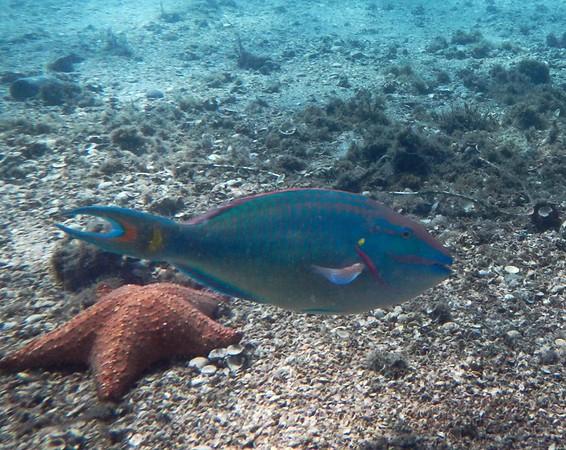 Underwater Blue Heron Bridge