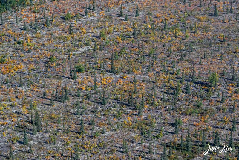 Rust's_Beluga Lake__6100846-2-Juno Kim.jpg